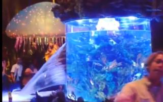 Huge fish tank bursts open in Disney World restaurant (video)