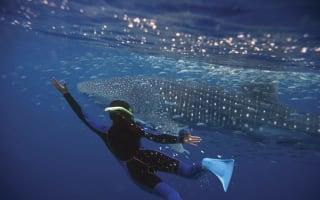 Swim with the animals in Australia