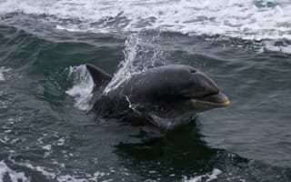 Five swimmers 'attacked' by dolphin in Ireland
