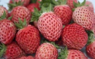 Bubblegum flavour berry on sale