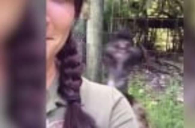Watch this Camera-shy Emu