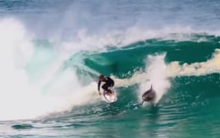 Dolphin shares wave with pro surfer in Australia (video)