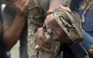 Python kills man outside luxury hotel