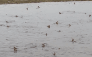 50 sharks spotted in West Sussex (video)