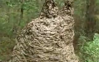 Huge wasp nest containing one million yellow jackets found in Florida