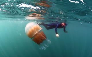 Giant jellyfish surrounds snorkeler in Dorset (video)