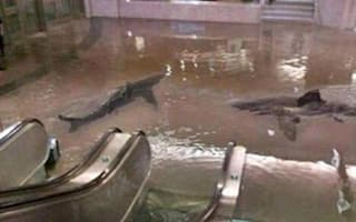 Photos and video: Sharks swim through the streets of New York