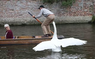 Swan attacks tourists and rowers on River Cam