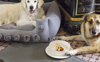 Is this the world's most luxurious hotel for pets?