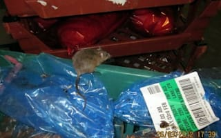 Tesco fined over massive mouse in London store