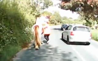 Speeding driver just misses dangerous crash while racing past horse