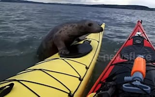 Sneaky seal hitches a ride on kayak on Forth Estuary