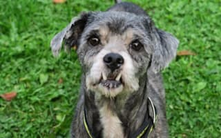 Creepy-looking dog with 'Dracula fangs' searching for new home this Halloween