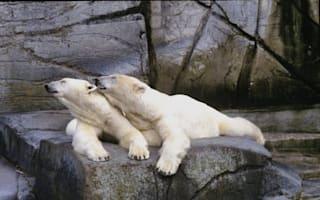 Polar bear to move zoos after 'divorce'