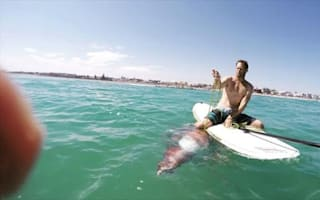 Injured squid clings to surfboard