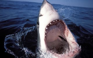 Cape Town great white shark attack: Surfer tossed 3 metres into air