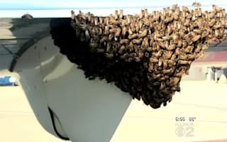 Swarm of thousands of bees delay US flight