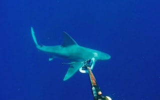 Stranded scuba diver circled by two sharks in Florida