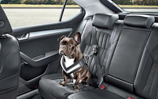 Video provides helpful tips for stress-free road trips with your pet