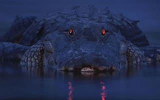 You looking at me? Amazing pic captures alligator's creepy red eyes