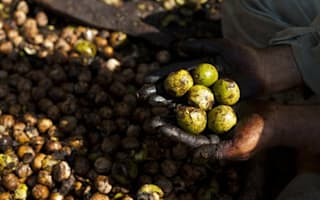 Why investors are paying £20,000 for walnuts