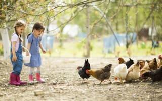 Best cheap family breaks on working farms in the UK