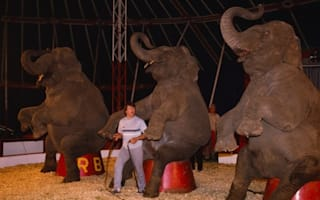 UK circuses face ban from using wild animals in two years