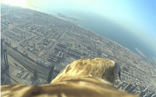 Eagle cam captures record-breaking flight from top of Burj Khalifa