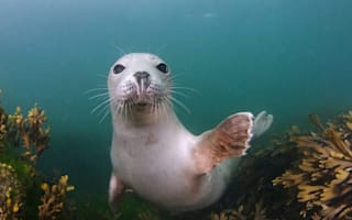 Friendly seal pups delight divers (beautiful photos)