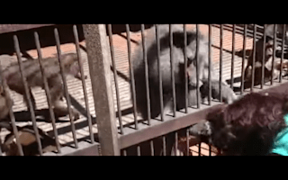 Monkey gives tourist a big surprise