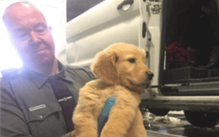 More than 100 puppies rescued after van transporting them crashed