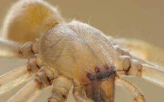 Mazda recalls vehicles over spider fears