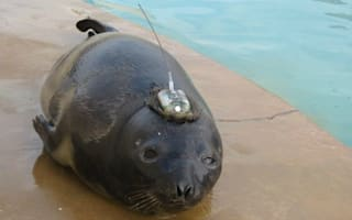 Seal lost in Britain to be flown back to Iceland