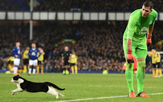 Goodison cat reminded me of Cecil the lion - Martinez