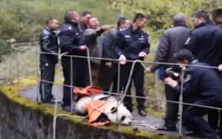 Panda rescued after falling into hydroelectric power station