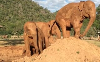 Elephant does HUGE 'revenge' fart on friend's head