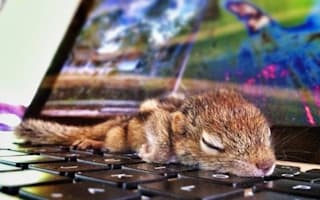 Wildlife film-maker hand rears orphaned baby palm squirrel - and it's CUTE