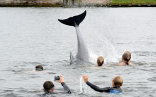 Friendly dolphin plays with children in German canal