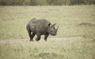 Black rhino hunt permit auctioned