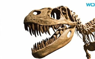 Would you buy a T-rex skull for $1.8 million?