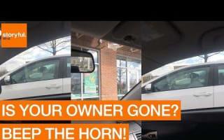 Impatient dog misses her owner,  beeps car horn
