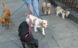 Rewards for dog mess whistleblowers