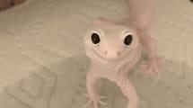 Este lagarto rosa protagoniza el nuevo video viral del momento: y sí, es real