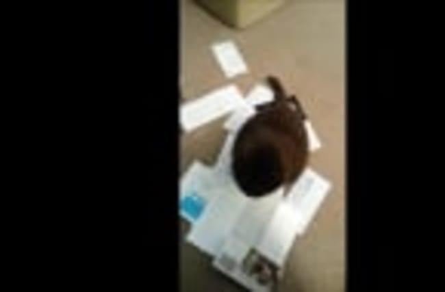 Strange cat likes mail dumped on her head
