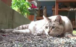 Feral cats released to tackle New York's rat problem
