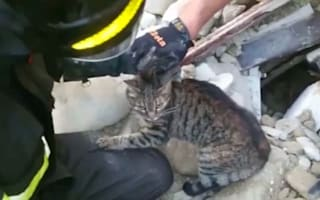 Cat pulled from rubble two weeks after earthquake