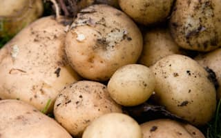 Airline tests onboard Wi-Fi with sacks of potatoes