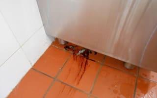 Cockroaches and dead pigeon found in Swansea restaurant kitchen