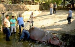 Zoo hippo beaten to death in 'inhumane attack'