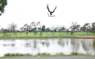 Real or fake? Hawk drops snake on family BBQ in Australia